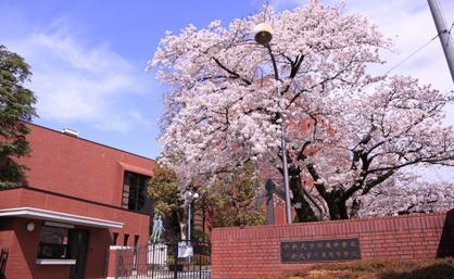 中学校 附属 中央 大学