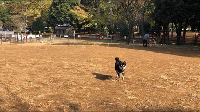 新横浜 ドッグラン