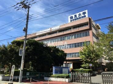 歯学部 鶴見 大学